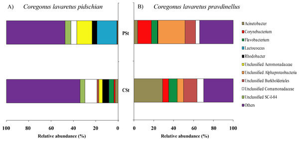 Composition of microbiota at the genus level in stomach mucosa of C.l. pidschian (A) and C. l. pravdinellus (B).