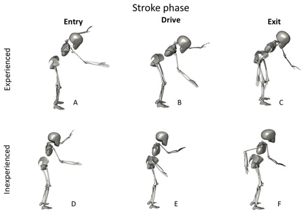 A graphical representation of the differences in stroke kinematics between experienced and inexperienced participants.