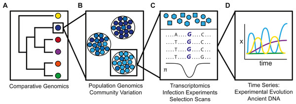 Schematic illustration how genetic variation varies (A) across species, (B) across populations, (C) within a population, and (D) on an ecological time scale.