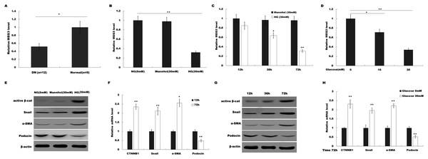 HG suppressed MEG3 expression in podocytes.