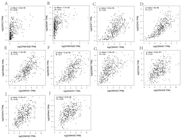 Co-expression analysis of DElncRNAs from ceRNA network with related hub genes in HCC patients.