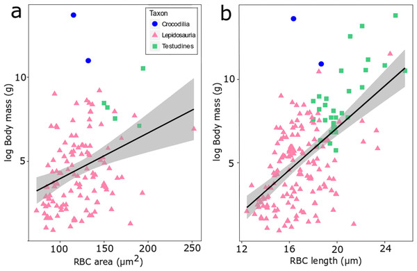 RBC area (A) and length (B) regressed against log body mass for 188 species of extant reptiles.