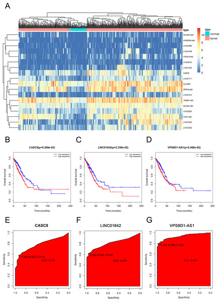 The elevated expression and prognostic characteristics of 3 selected lncRNAs.