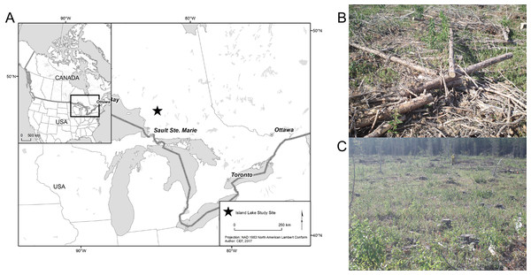 (A) The study area of the Island Lake Experimental Research site in Ontario, Canada; (B) example of a tree-length harvested plot; (C) example of a full-tree biomass plot.