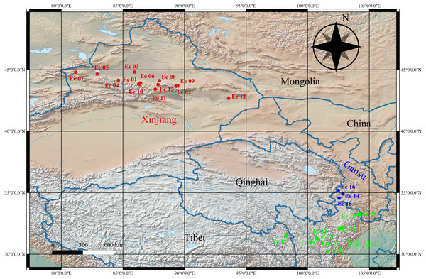 Geographical distribution of the studied  Elymus excelsus accessions from western China.