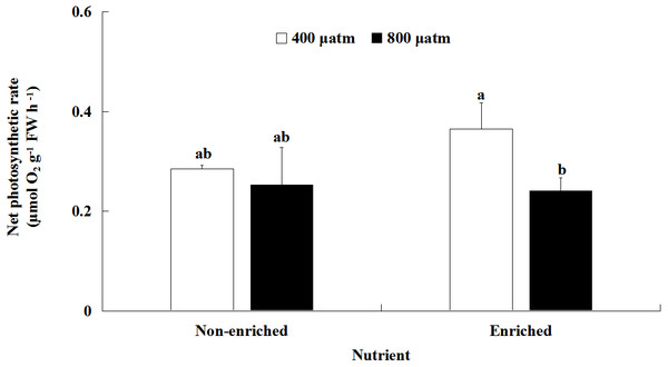 Net photosynthetic rate (Pn) of S. japonica cultured for 6 days under two pCO2 and two nutrient levels.