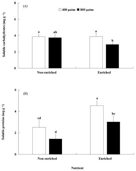 The contents of soluble carbohydrates (A) and soluble proteins (B) of S. japonica cultured for 6 days under two pCO2 and two nutrient levels.