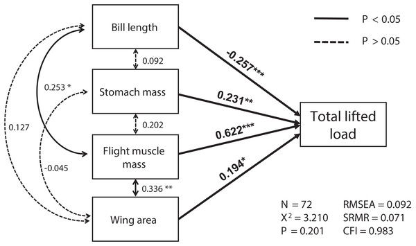 The relationships among morphological parameters and their effects on total lifted load for Eurasian tree sparrows (Passer montanus) in the best-fit structural equation model (SEM).
