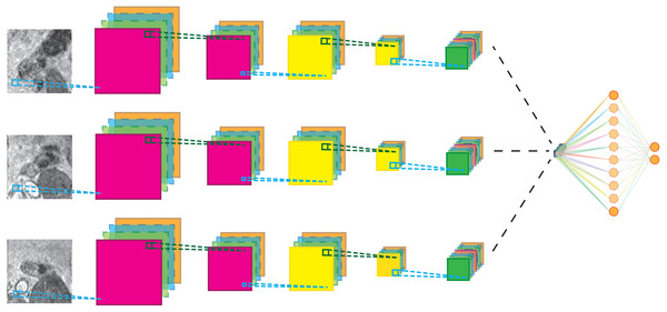 Schematic representation of the multi-view network for three-views.