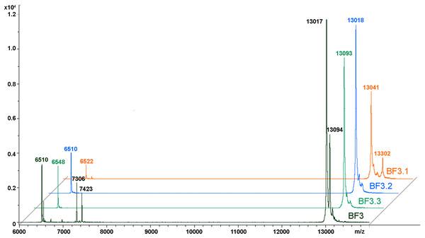MALDI mass spectroscopy analysis of B. fasciatus venom fractions.