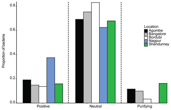 Barplots show the proportion of bacteria whose distribution is consistent with positive selection, neutral assembly, or negative/purifying selection, for dragonflies sampled from a given location.