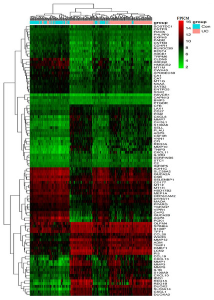 Heat map of the FPKM of the top 100 DEGs from GPL570 samples.