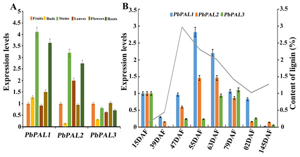 Expression analysis of PbPALs at various tissues of pear (A) and at different stages of fruit development (B).