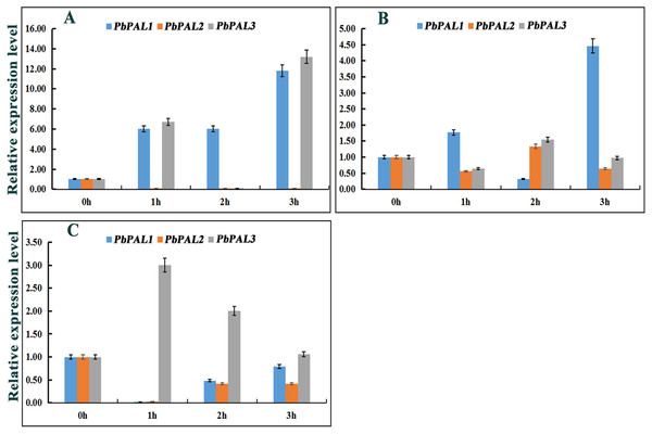 Hormone response pattern analysis of PbPALs.