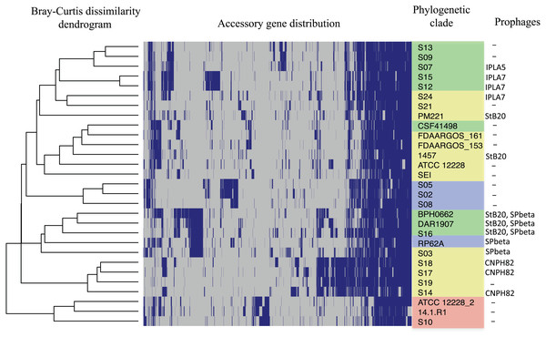 Distribution of accessory genes in the S. epidermidis genomes.