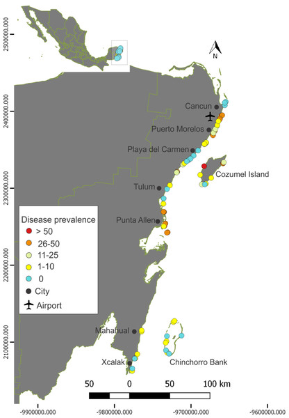 Prevalence of the Stony Coral Tissue Loss Disease in the Mexican Caribbean.