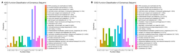 KOG and COG analysis of differentially expressed genes.