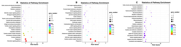 KEGG analysis of differentially expressed genes.
