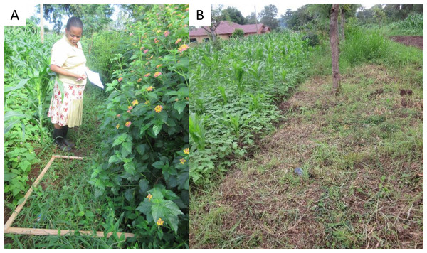 Field margin management practices, undisturbed (A) and disturbed (B).