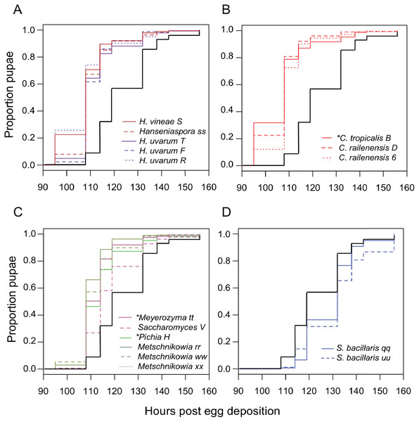 Larval development of gnotobiotic D. melanogaster mono-associated with yeast.
