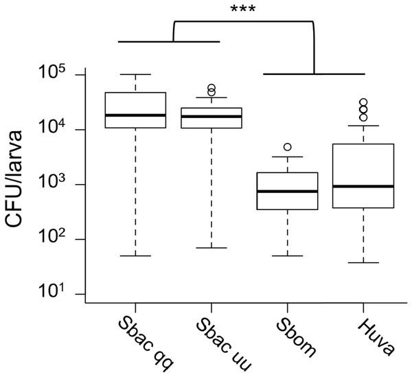 Viable cell density of yeasts inside of D. melanogaster larvae.