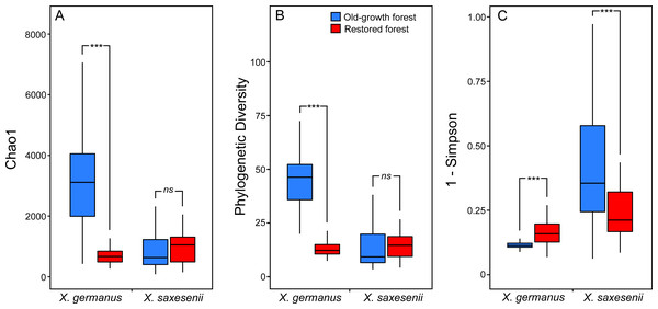 Alpha-diversity indices (A, Chao 1; B, Faith's Phylogenetic Diversity; and (C) 1-Simpson) for fungal communities associated with the exotic ambrosia beetle X. germanus and the native ambrosia beetle X. saxesenii in old-growth and restored forests.