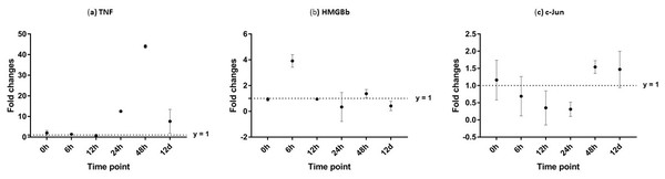 Analysis of gene expression profile in hepatopancreas of WSSV-challenged giant tiger shrimp by microfluidic dynamic array at 0, 6, 12, 24, 48 h and 12 days post-injection in (A) TNF, (B) HMGBb and (C) c-Jun.