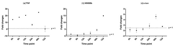Analysis of gene expression profile in muscle tissue of WSSV-challenged giant tiger shrimp by microfluidic dynamic array at 0, 6, 12, 24, 48 h and 12 days post-injection in (A) TNF, (B) HMGBb and (C) c-Jun.