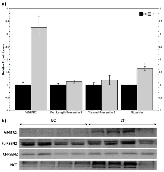 Relative total protein levels of vascular endothelial growth factor receptor 2 (VEGFR2) and gamma secretase subunits presenilin 2 and nicastrin in the lung of control (EC) and torpid (LT) ground squirrels.