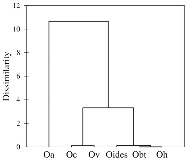 Dendrogram based on the Mahalanobis distances obtained from the traditional morphometry analysis of body measurements of octopuses of the genus Octopus from the northeastern Pacific.