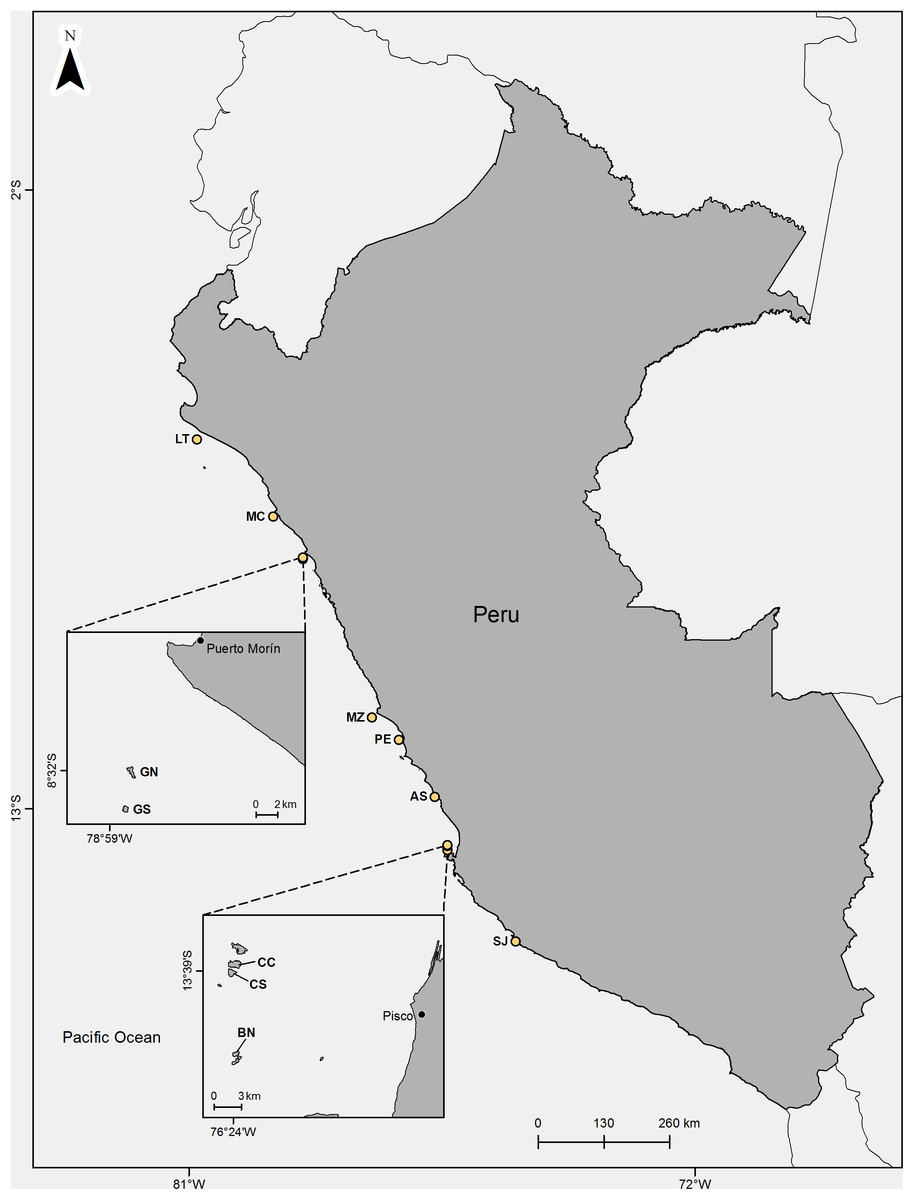Response Of Colonial Peruvian Guano Birds To Flying UAVs
