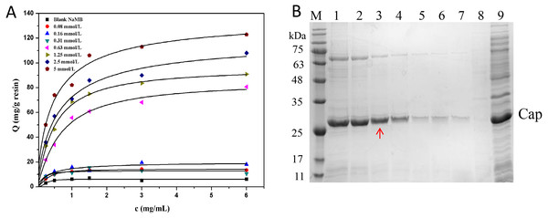 The optimization of ligand density.