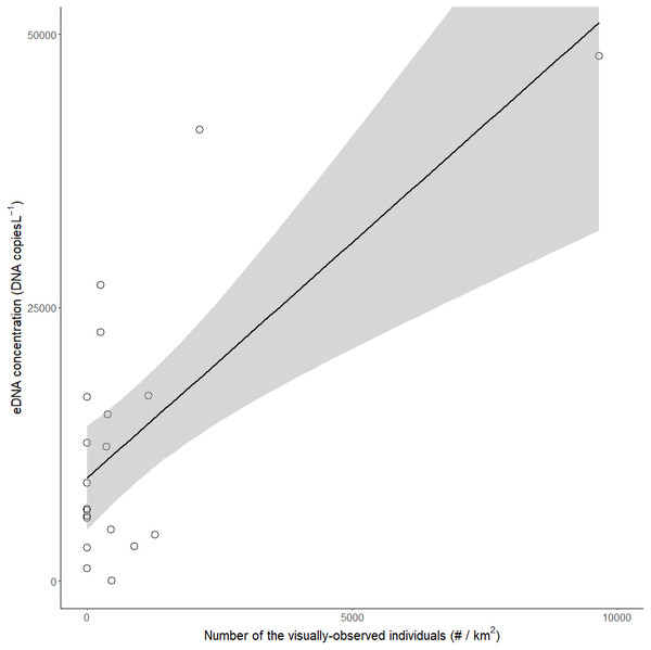 Relationship between the visual observation number of red-eared sliders (Trachemys scripta elegans) per km2 and their eDNA concentrations in the ponds.