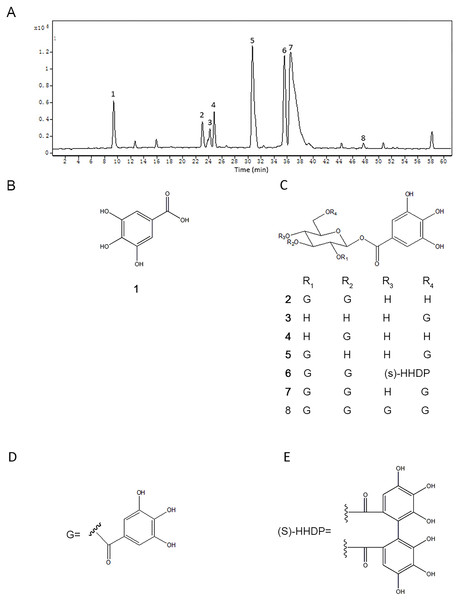 The chromatogram of TQPE analyzed by HPLC-QTOF (A) and the structures of eight dominated polyphenols in TQPE (B–E).
