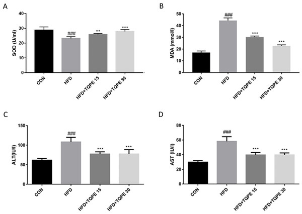 TQPE administration inhibits oxidative stress and liver injury in NAFLD.