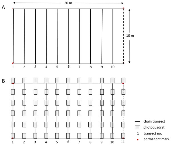 Layout of 10 × 20 m permanent monitoring plot showing permanent corner marks, (A) positions of 10 temporary chain transects and (B) positions of 11 temporary transects with 66 photoquadrats.