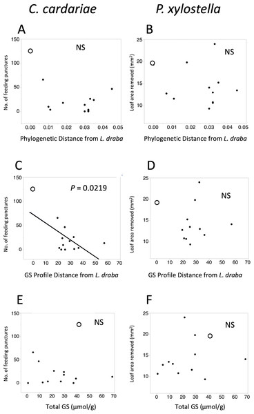 Scatter plots of feeding intensity by C. cardariae (feeding punctures) and P. xylostella (mm2 removed) in bioassays.