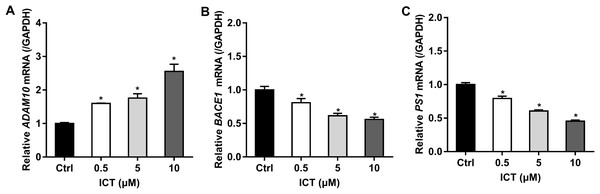Effect of ICT (0.5, 5, 10 μM) on mRNA expression of ADAM10, BACE1 and PS1 in APP-PS1-HEK293 cells.