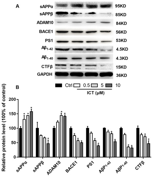 Effects of ICT on protein expression of the APP metabolic pathway in APP-PS1-HEK293 cells.