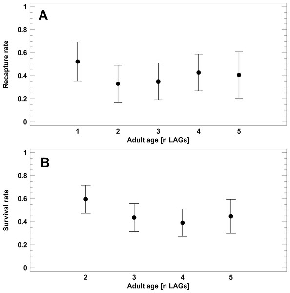 Corrected recapture rates (CRR) of known-age adult classes (A) and survival rates estimated from static life tables (B).