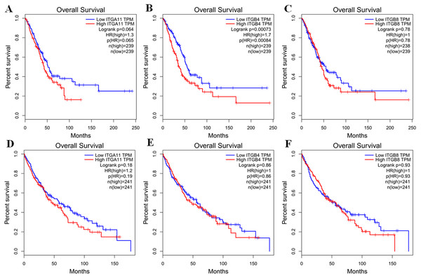 Kaplan–Meier survival curves of overall survival (OS) in LUAD and LUSC (GEPIA database).