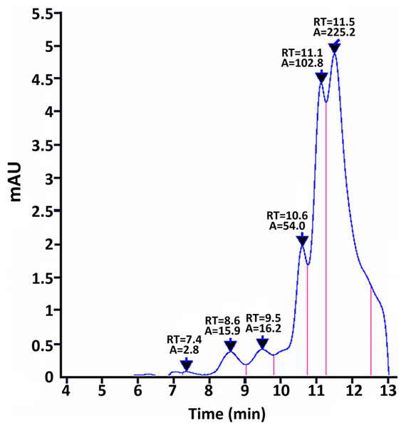 SEC-HPLC analysis of purified MurI under native conditions.