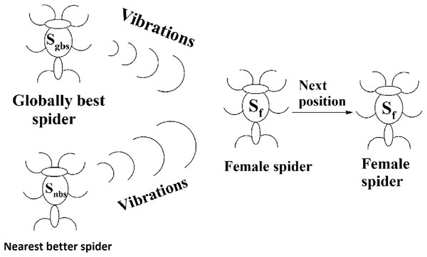 Next position of a female spider in SSODCSC.