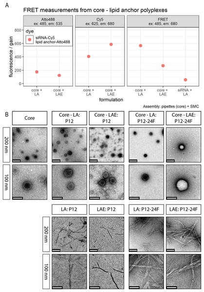FRET and TEM measurements of core (CO + siRNA)-lipid anchor polyplexes and their components.