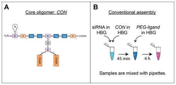 Sequence-defined oligomers and their corresponding nanoparticle production methods.