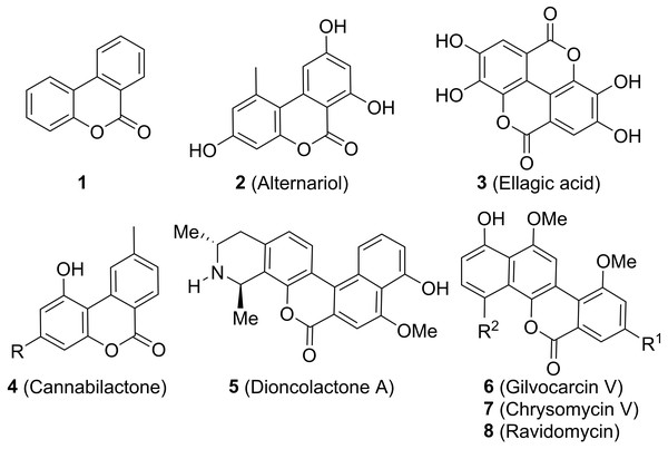The structure of benzo[c]coumarin and some natural and synthetic bioactive analogues.