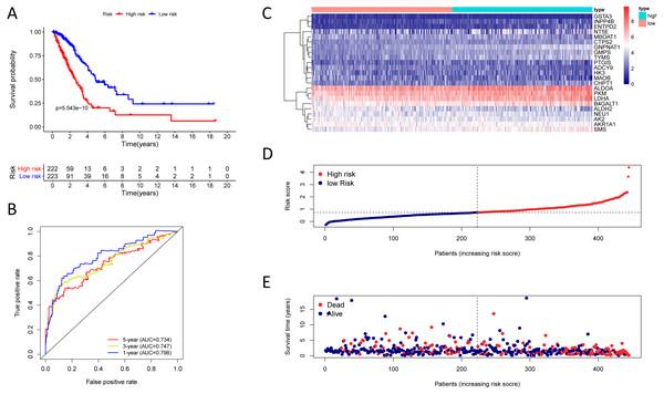 Kaplan–Meier analysis, time-dependent ROC analysis, and risk score analysis for the twenty-three gene signature in the TCGA-LUAD cohort.