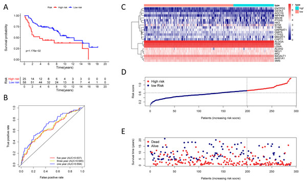 Kaplan–Meier analysis, time-dependent ROC analysis, and risk score analysis for the twenty-three gene signature in the GSE30219 cohort.