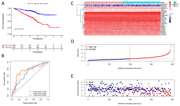 Kaplan–Meier analysis, time-dependent ROC analysis, and risk score analysis for the twenty-three gene signature in the GSE72094 cohort.