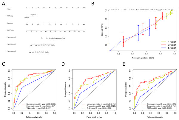 Building the nomogram for predicting the overall survival of LUAD patients from the TCGA cohort.